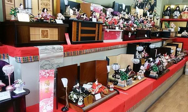 雛人形販売会 最終セール開催中🌼